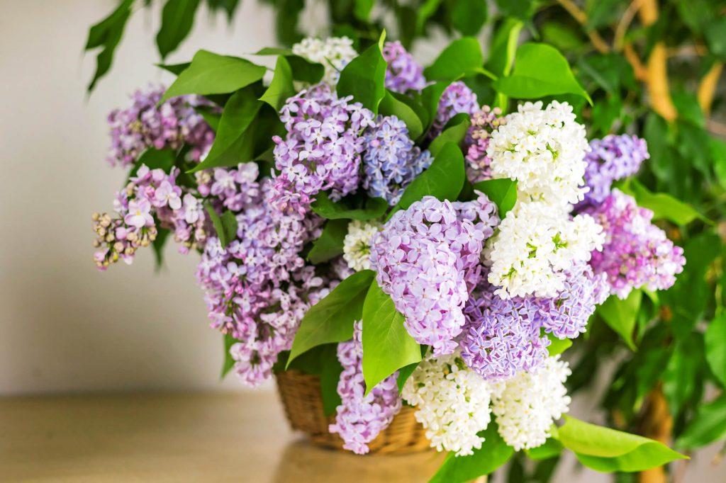 Seasonal botanicals