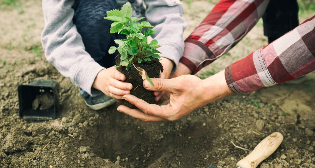 Plant some seeds in the garden are fun outdoor family activities