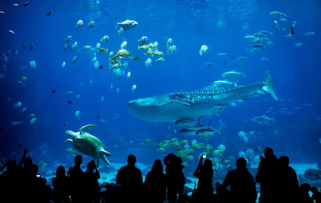 Visit the underwater aquarium for fun outdoor family activities